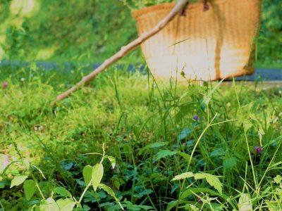 Les plantes non-cultivées comestibles : Précautions et conseils de cueillette